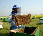 BANGLADESH DHAKA HONEY BEE FARMING