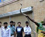Snake charmer show