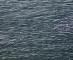 Dolphins spotted in Arabian Sea
