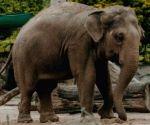 Wild elephant tramples Kerala woman to death