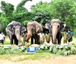 Special celebrations for elephants at Hyd Zoo including 82-yr-old Rani