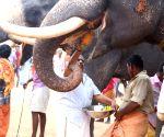 Kollam Pooram festival