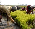 Farm labours