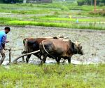 Amid Covid-19, AP procures record quantities of agri-produce