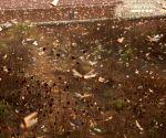 Locust invasion threatens entire country: Pak SC told