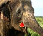 Feast for jumbos on elephant appreciation day!
