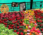 Iconic Bengaluru flower show postponed due to pandemic