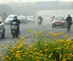 Fog brings visibility to 50m in Delhi, rain on Monday