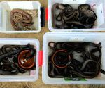 111 snakes rescued during Shravan in UP