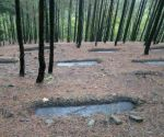 'Forest' not defined in any Central laws, says government