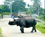 Rhino strays away from Kaziranga National Park