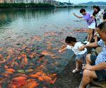 CHINA FUJIAN RIVER FISH
