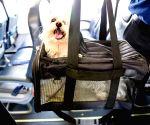 Furry Companion: Man books Air India business class cabin for pet dog