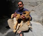 MIDEAST GAZA LION PET