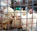 Andhra, Telangana get notice over killing chickens