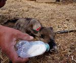 Reindeers farm in Genhe