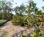 Goa body opposes cutting of 50,000 trees for central projects