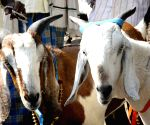 Two goats 'arrested' in Telangana for grazing on saplings