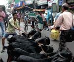Goats on Kolkata roads
