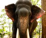 Probe ordered as elephant hired for wedding goes on rampage