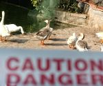 Bird flu reaches 32 districts in MP, emphasis on containing it