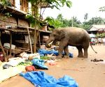 Tuskers continue to roam in UP, kills another person