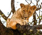 Gweru (Zimbabwe): Antelope Park