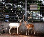 CHINA ZOO SUMMER ANIMALS