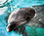 CHINA HARBIN BOTTLENOSE DOLPHIN