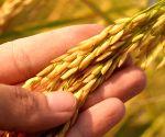 Foodgrains worth Rs 1.6K cr procured in Andhra