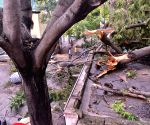 Storm, heavy rainfall leave trees uprooted
