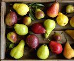 Natural antioxidants can keep heart, cancer diseases at bay