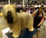 U.S. HOUSTON DOG SHOW