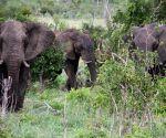 ZIMBABWE HWANGE ELEPHANTS