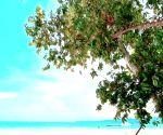 Ileana D'Cruz is a 'beach bum for life'