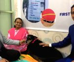 Obese dog undergoes 'weight-loss' surgery in Pune