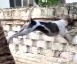 Harsh Goenka shares video of nosy dog, Internet ROFL