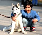 Pakistan islamabad dog Show
