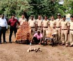 Free Photo: K'taka forest officials raid astrologer's house, seize tiger skin, claws .