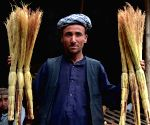 Brooms shop in Kabul