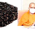 'Kala namak' rice brings accolades for Yogi govt