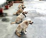 Karnataka Police to induct 50 dogs at Rs 2.5 crore