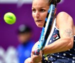 Pliskova stuns Wozniacki at WTA Finals