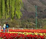 Kashmir tourism in top gear towards revival