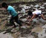 NEPAL KATHMANDU RICE PLANTATION
