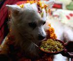 NEPAL KATHMANDU TIHAR FESTIVAL DOG