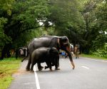 3 elephants mowed down by speeding truck in Odisha