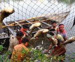 Fish farming gets a boost in UP