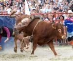HUNGARY KOMAROM RODEO BULL RIDING