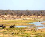 S.Africa beefs up security at Kruger National Park